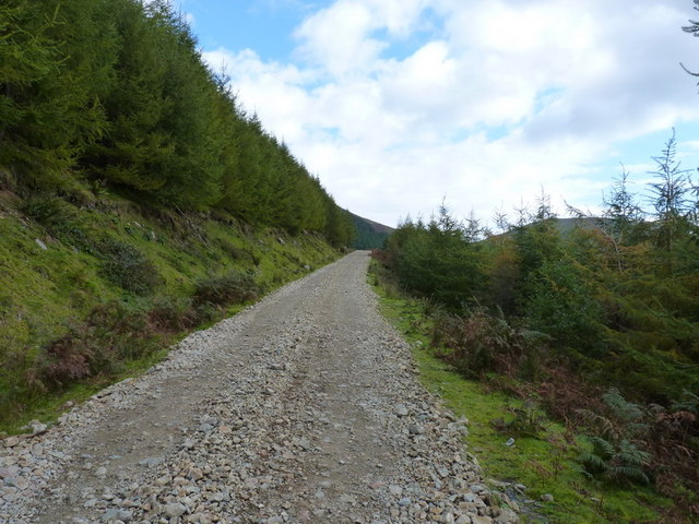Forest track on Graig Wen