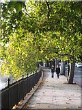 TQ2977 : The Thames Embankment in Grosvenor Road by Rod Allday
