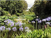 SW7627 : Trebah Garden by David Dixon
