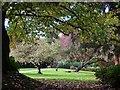 ST3087 : Autumn colour in Belle Vue Park by Robin Drayton