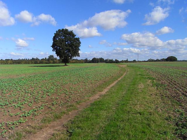 Farmland, Chieveley