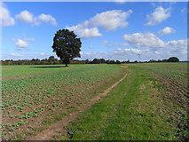 SU4773 : Farmland, Chieveley by Andrew Smith