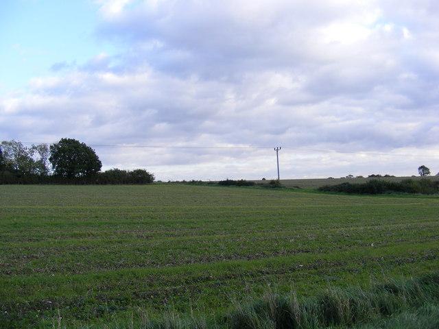 Fields looking towards Iris Wood
