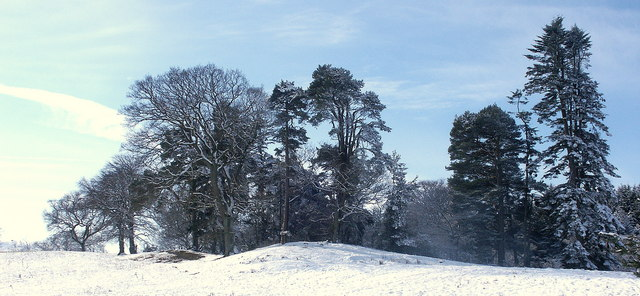 Winter trees on the low moor at Twizell
