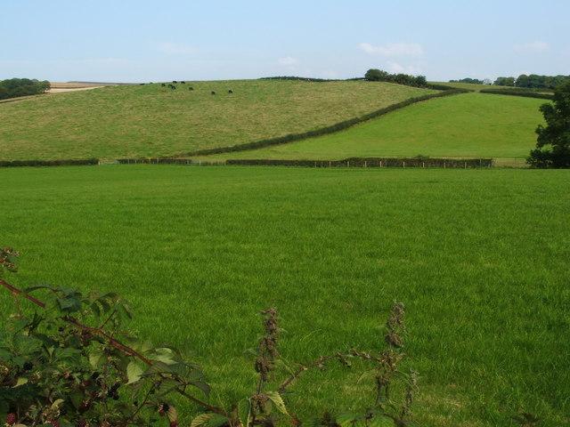 Fields at North Kirkton