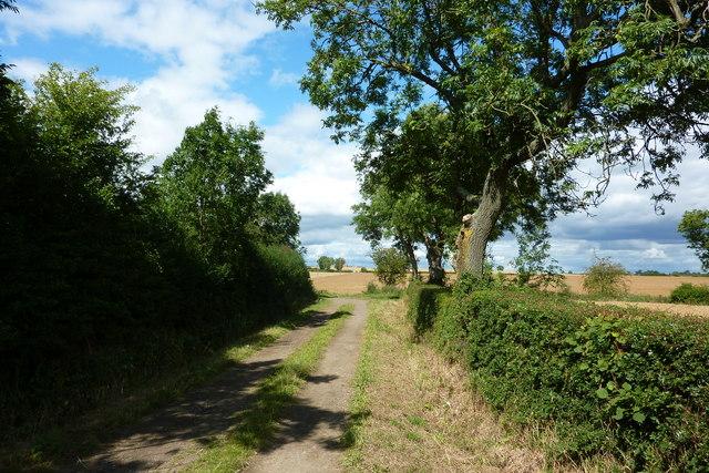 Looking North along Merrybent Lane towards Coniscliffe Grange