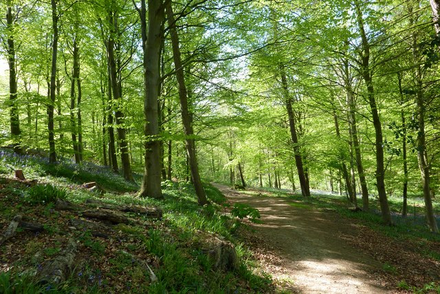 Footpath through woods above Percy Beck