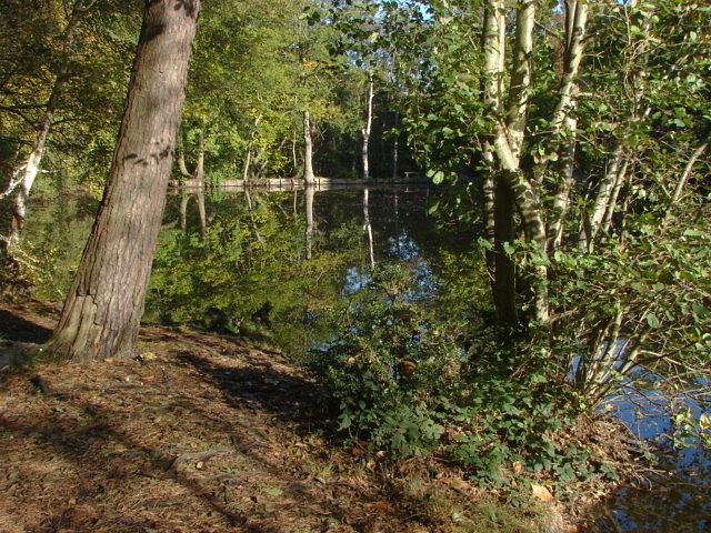 Middle Pond, Fairmile Common