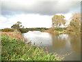 TM4492 : River Waveney in Autumn #2 by Adrian S Pye
