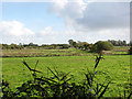 TM4392 : Pastures south of the Waveney, Beccles Marshes by Evelyn Simak