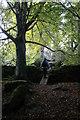 O2220 : The Barnaslingan Woodland by Alan James