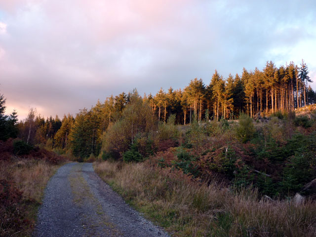 Forestry road, Pennington Height