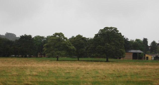 Trees on the River Thames flood plain near Petersham