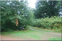 TQ1672 : Path off the Thames Path by N Chadwick
