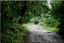 TQ1672 : Thames Path by N Chadwick