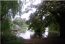 TQ1672 : Riverside trees and high tide on the River Thames by N Chadwick