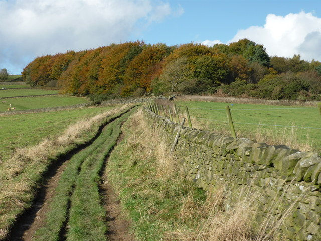 Track approaching Stoke Wood