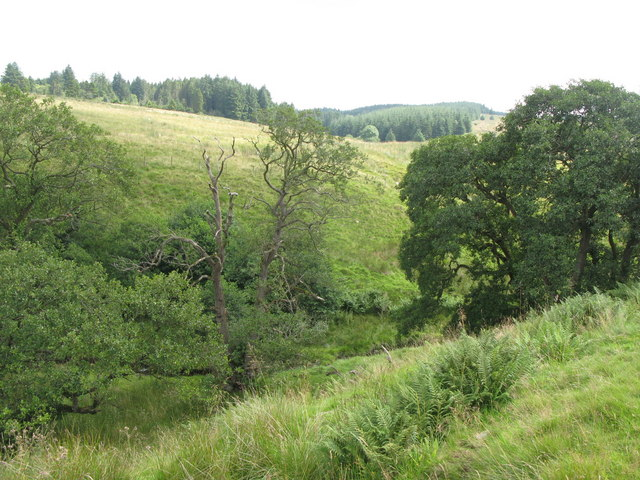 The cleugh of Trout Beck