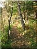 NT2840 : Footpath, Glentress by Mick Garratt