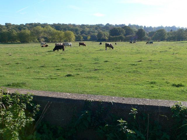 A rural scene in London
