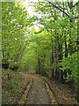 TQ7067 : Woodland Track in Birch Wood by David Anstiss