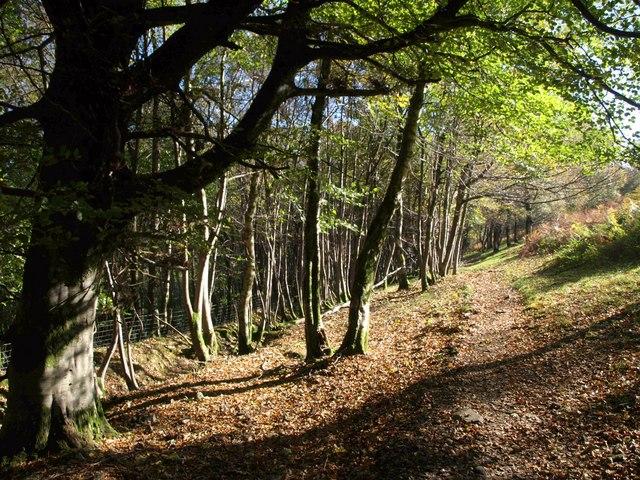 Bridleway, Oak Coppices
