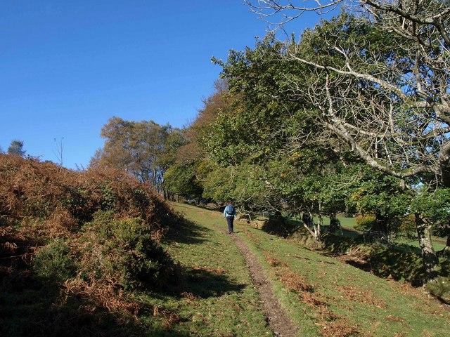 Bridleway on Haytor Down