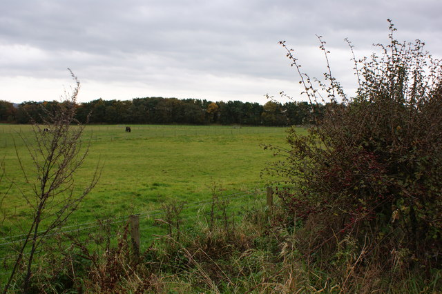 Horses grazing in a field by the B5408
