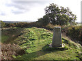 ST9101 : Spettisbury Rings trig point by michael ely