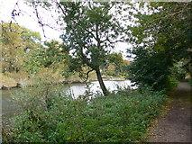 TQ1673 : The Thames Path by Eirian Evans