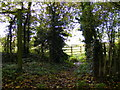 TM3465 : Footpath to Hill Farm Road by Adrian Cable