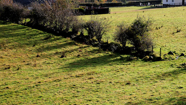 Field and hedge, Glenoe