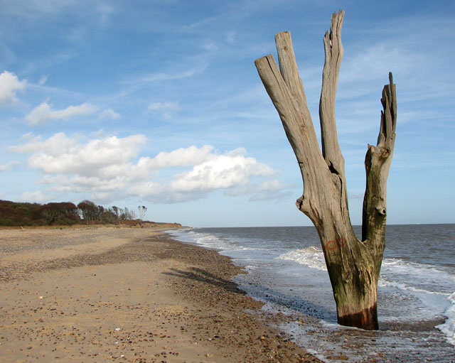 The famous dead tree in the sea by Benacre Broad