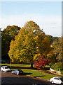 SZ0796 : Northbourne: large tree on Gillam Road corner by Chris Downer