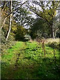 TQ1350 : Footpath on Ranmore Common by Shazz