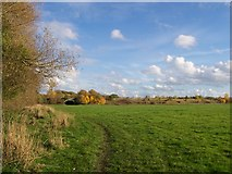 SO8252 : Field next to bypass by Andrew King