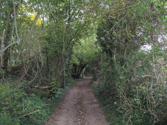 Long Lane byway in Three Barrows Down Wood