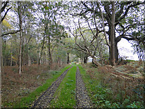 TM5284 : Trackway through the woods by Adrian S Pye