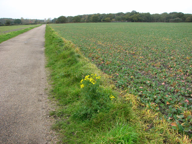 The Suffolk Coast Path through the Benacre Estate