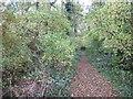 TF1501 : Woodland footpath in Bretton, Peterborough by Richard Humphrey