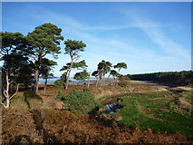 NT6378 : East Lothian Landscape : The West Bank of the Hedderwick Burn by Richard West
