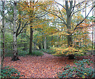 TG2202 : Autumnal colours on Dunston Common by Evelyn Simak