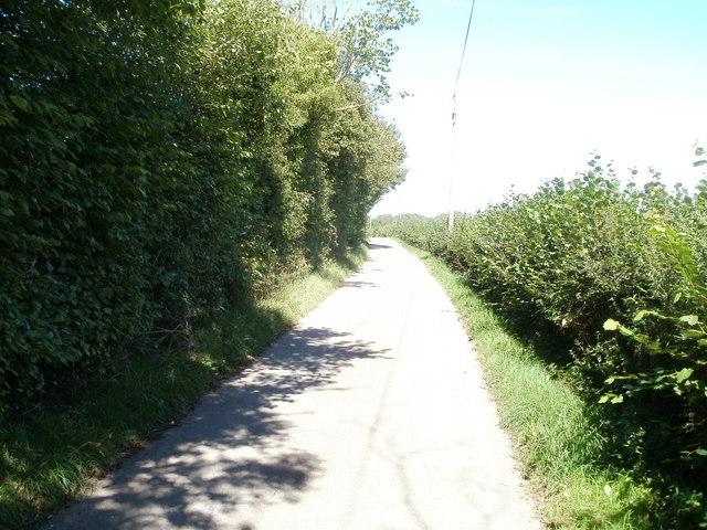 Contrasting hedges north of Garn Farm