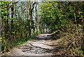TQ5503 : Wealdway to Folkington by N Chadwick