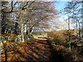 SE0630 : Leaves on the path round Ogden Water by Michael Steele