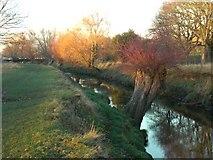 TQ2173 : Beverley Brook, near Killcat Corner by Stefan Czapski