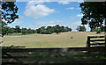 SJ5305 : Parkland, Eaton Mascott by Stephen Richards