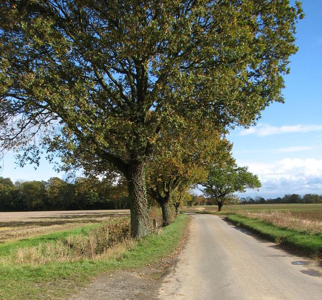 Approaching Tyrrel's Wood on Wood Lane