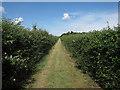 TL6759 : Icknield Way by Hugh Venables