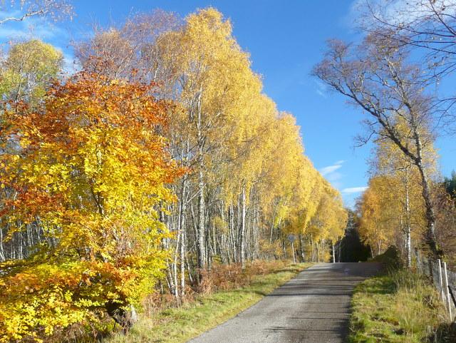 Autumn colour by Gruinards Lodge
